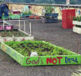 Image of A garden plot on the Metro Atlanta Task Force shelter roof.