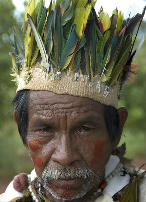 The 'silent genocide' of the Brazilian Guarani tribe