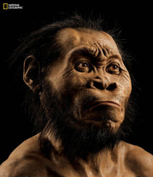 Discovery of 2.8 million-year-old fossils reveals 'Homo naledi'