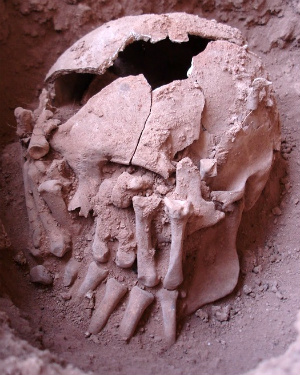 Did beheadings occur in America long ago? 9,000-year-old skull may be the key to finding out