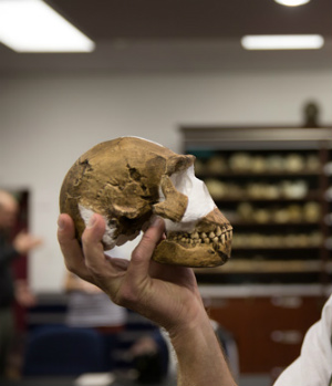 All hail homo naledi - the new species of humanity discovered in South Africa