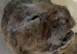 Image of Two Eurasian lion cubs were found almost perfectly preserved in the permafrost near Siberia.