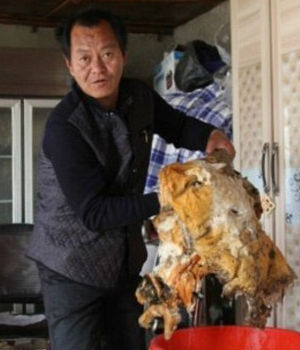Rare, Chinese fungus said to prolong life - if not IMMORTALITY