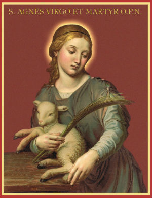 Pope Francis continues tradition of blessing two lambs in memory of St. Agnes