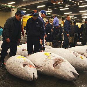FISHY: Sushi chain pays $117,000 for SINGLE tuna