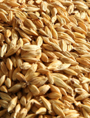 Low-carb is so last year! This year incorporate more grains like barley!