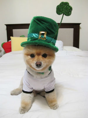 How people celebrate St. Patrick's Day around the world!