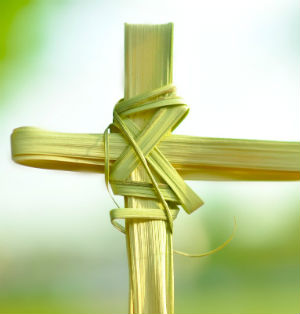Where do the palms for Palm Sunday come from?