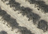 Image of Over 100 million trees have died (Lucy Nicholson/Reuters).