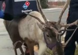 Image of Domino's has decided to use reindeer to deliver pizza this winter (Facebook/Twitter).