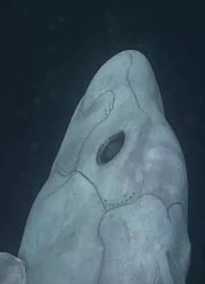 What is this creature lurking in the depths? Geologists stumble upon shocking discovery