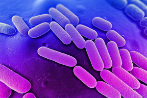 Is this the way the world ends? Humans have officially lost the war against bacteria