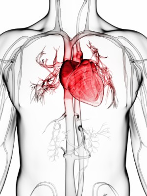 UCLA teams up with TransMedics to revolutionize the future of heart transplants