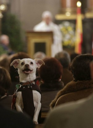 Animals to be given same rights as Christians? Activists storm church with ridiculous demand