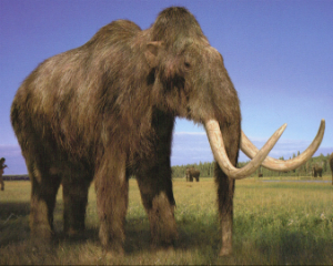 They can, but should they? Scientists bringing back woolly mammoth from extinction