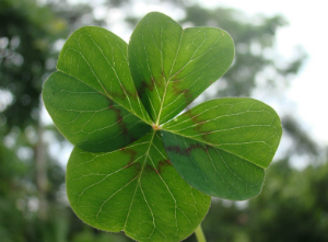 The shamrock is a well-known symbol of Ireland.