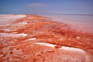 Red algae is still common, and can sometimes stain water the color of blood.