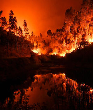At least 62 people have been killed in huge forest fires in the central part of Portugal Saturday and Sunday.