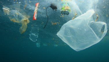 Plastic waste pollutes our oceans and is killing wildlife.