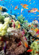 Image of The Coral Reef Southern Red Sea near Safaga Egypt.