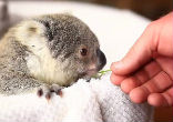 Image of Baby Imogen will be celebrating her first birthday with lots of eucalyptus leaves.