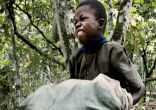 Image of A child slave works on a chocolate plantation.
