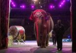 Image of The Ringling Bros. and Barnum & Baily Circus will close after 146 years (Todd Hesler).