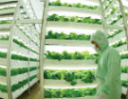 Image of Vertical farms already exist on small scale, but their popularity is catching on and rapid expansion and development is expected within the next decade.