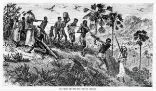 Image of An image from 1865 shows Africans being taken into slavery. One victim is being put to death arbitrarily, or for some unknown offense.