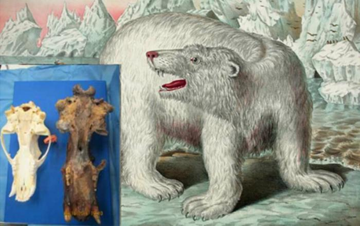"Is this the ""King Bear"" described in Inuit accounts?"