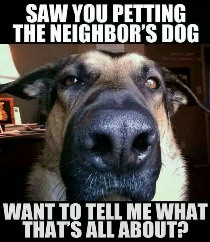 Funny Meme About Jealousy : Laugh alert  s top dog memes that were total favs