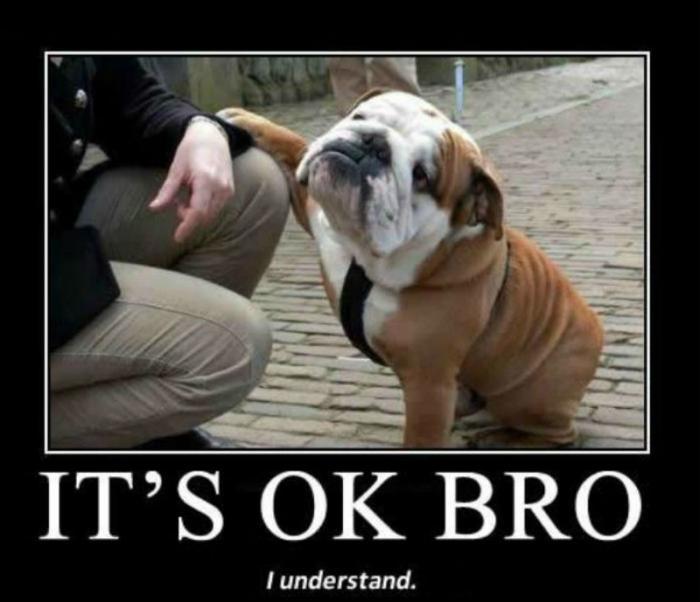 Best Friend Dog Puns