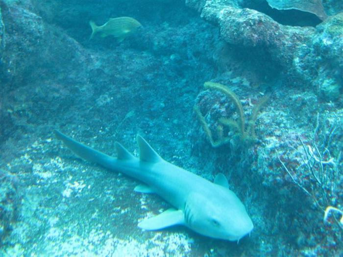 Xcaret Mexico is now host to the world's largest aquarium.