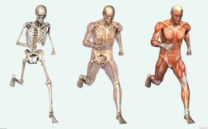 Currently, the human body has an expiration date of roughly 115 years.