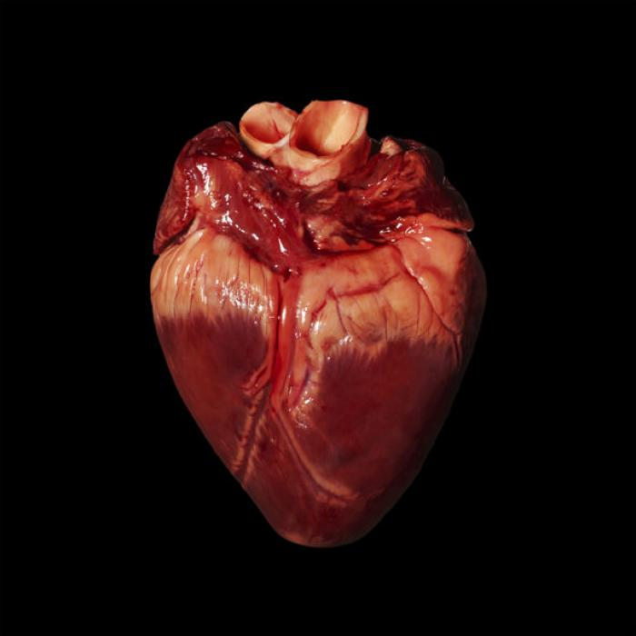 Scientists believe they can grow human organs for transplant, but what are the ethical boundaries of such research and practice?
