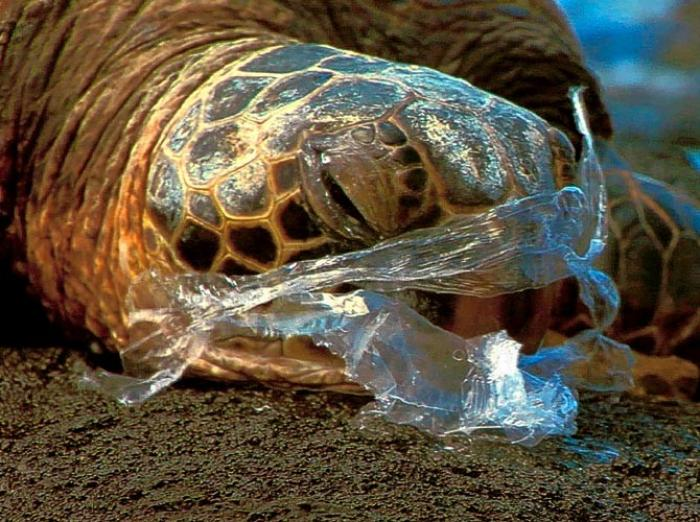 Plastic kills sea life, by strangling, choking, and blocking the consumption and digestion of food. Each day thousands of birds and fish starve to death due to plastic.