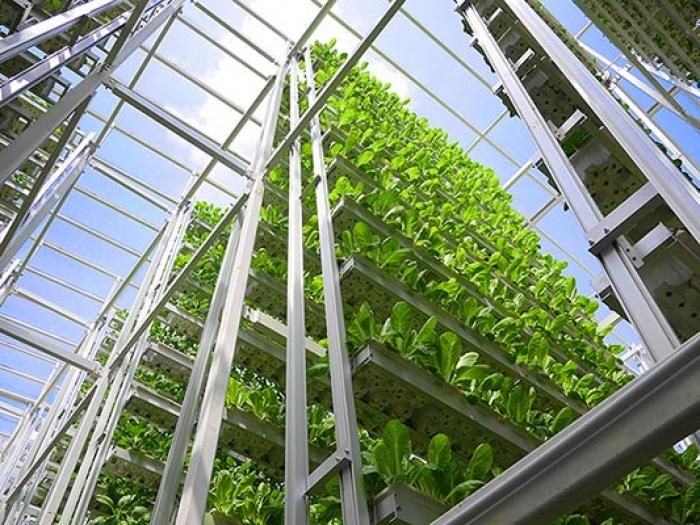 Skygreens, a vertical farm in Singapore already outproduces conventional farms by a factor between five to ten.