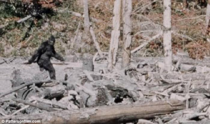 A classic photo from 1967 shows what appears to be Bigfoot, or a person in a gorilla costume.