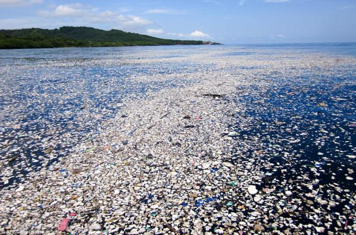Plastic garbage wafts around Roatan, killing wildlife and ruining the natural beauty of the coast.