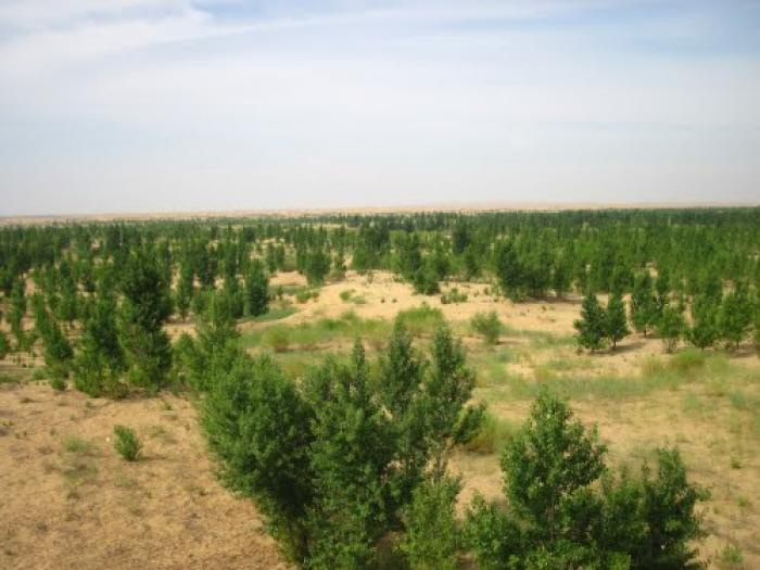 Desert greening in Inner Mongolia. Is this where the water is going?
