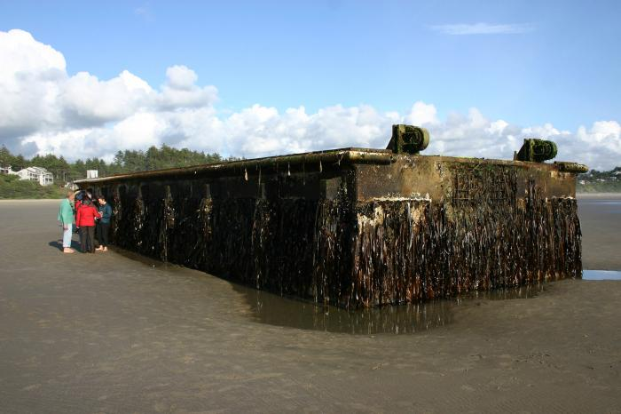 This floating dock came ashore in Oregon after crossing the ocean from Japan. Although larger items