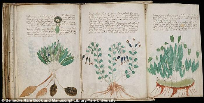 A U.S. botanist studied the plants illustrated in the Voynich manuscript, pictured. He claims at lea