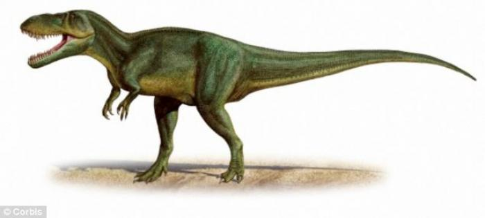 The bones were originally thought to belong to Torvosaurus tanneri, a dinosaur species from North Am