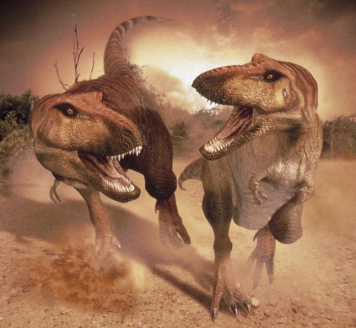 Scientists concluded that the smaller relative of the Tyrannorsaurys Rex, pictured, the Nanuqsaurus