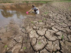 A villager walks through a parched paddy in Tianlin county, China in 2012. The report finds that cli