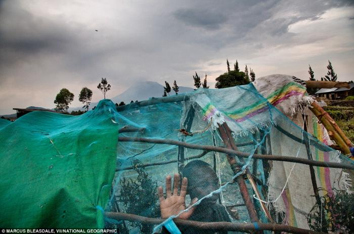 A refugee looks out of his makeshift tent.