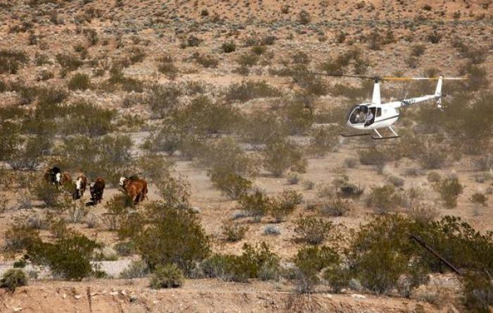 No less than eight helicopters have been deployed around the ranch for various duties.