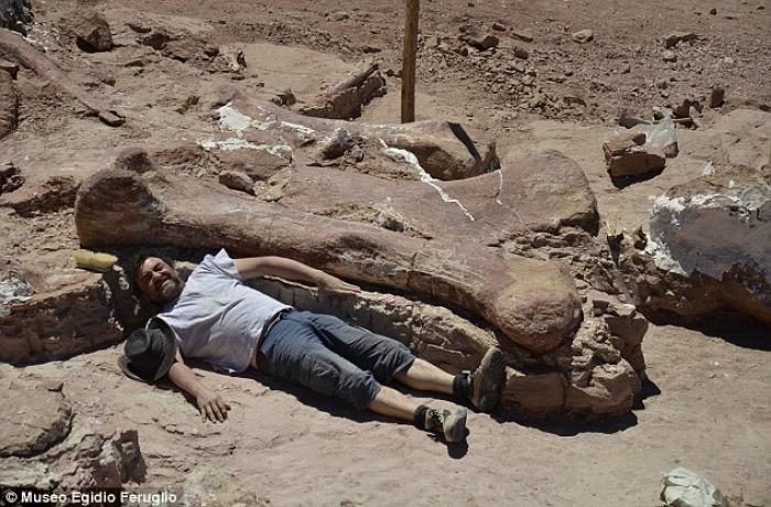 One of the paleontologists lies next to the femur of sauropod.
