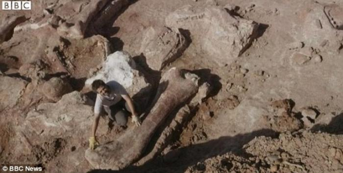 The fossilized bones of the biggest dinosaur ever discovered have been found in Argentina.