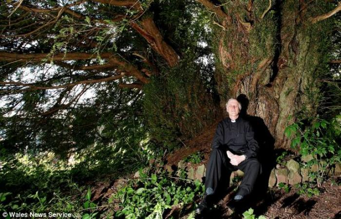 There are hundreds of ancient yew trees across Britain, but the 60-foot-wide giant (pictured with ch